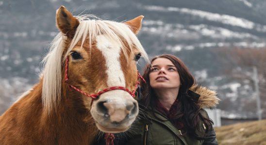Jak mieć konia i nie zbankrutować