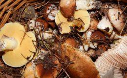 jak mrozić grzyby